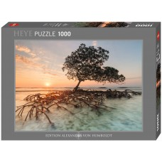 Heye 1000  - Red mangrove tree, Alexander von Humboldt