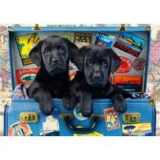 Bluebird 1000 - Traveling Labradors, Greg Cudford